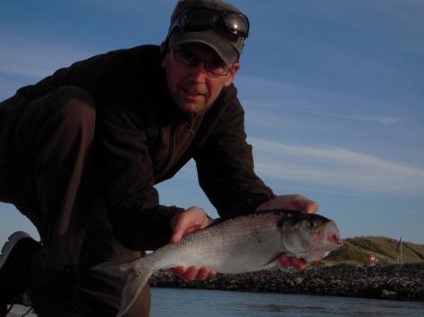 - Der er stor artrigdom langs den jyske vestkyst, hvilket virker dragende på denne UL-fisker :-)