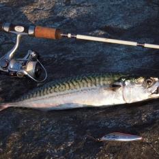 Makrel: 40,5cm