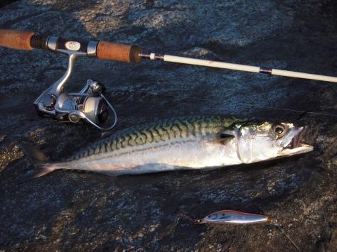 - Så kiggede mkrel-fiske-guden endelig med milde øjne på denne UL-fisker