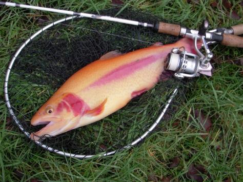 """- Heldigvis er U.L.-fiskeriet blevet """"dagligdag"""" :-)"""