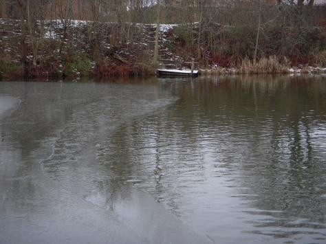 - Fifty-fifty isdækning, - men stadig fiskbart i Herning Fiskepark