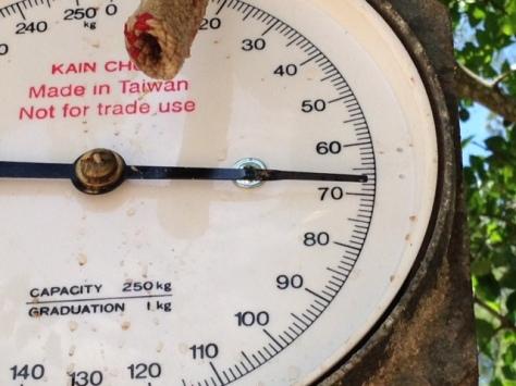 - Vægtnålen faldt først til ro lige inden 70-kilos mærket. Viiiildt!