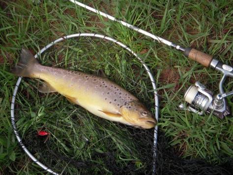 - Lækkerier leveret af Vorgod Å. 40 centimeters perfektion fra den brune å