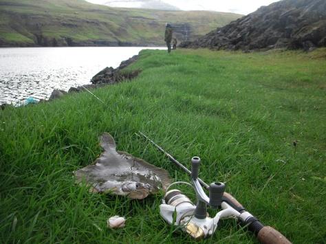 - Fra den vilde fladfiskedag, med en velsmagende rødspætte i forgrunden