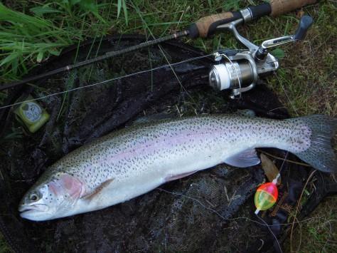 - Der var desværre langt hurtigere - og meget sultne - fisk, som kunne lide dej...