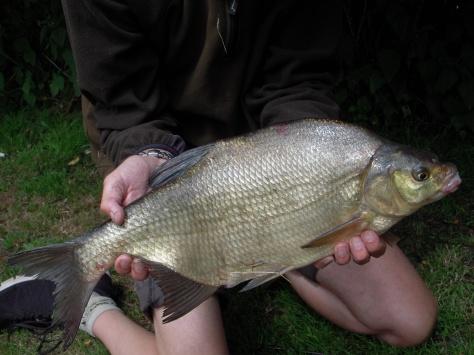 - Ganske præsentabel fisk så'n en fætter. 55 cm og 1790 gram. Nice!