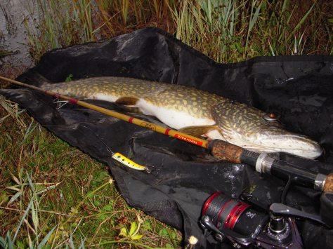 - Super fin debut-fisk til Elsteren :-)