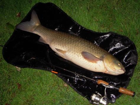 - En smuk fisk fra det smukke Belgien :-)