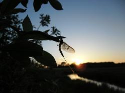 - Majfluen i al dens pragt (arkivfoto / ULFISK.com)