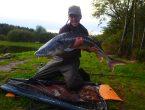 - Fra oktober 2017, hvor samme fisk målte 180 cm og blev estimeret til 35 kilo
