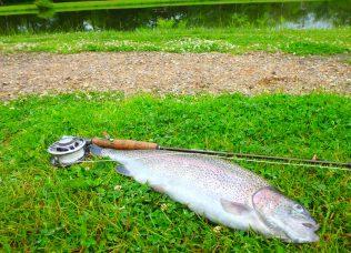- Terrestrial-fiskeri i ørredsøen