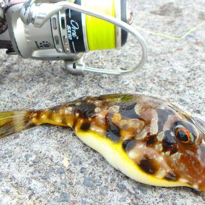 Kuglefisk: 15,0cm